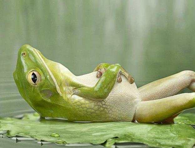Фото: Лягушка, лежащая на спине.