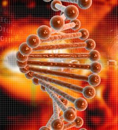 Фото: Мужчины с измененным геном NRXN3 — импульсивные алкоголики?