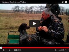 Фото: Охотничья собака носит водку.