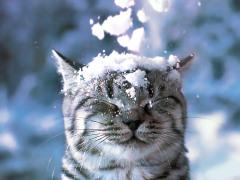 Фото: За морозостойких! Кот в снегу.