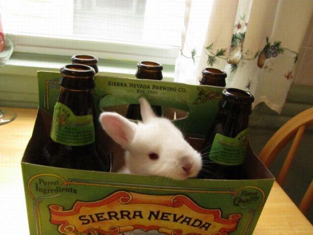 Фото: «Пивной» кролик.