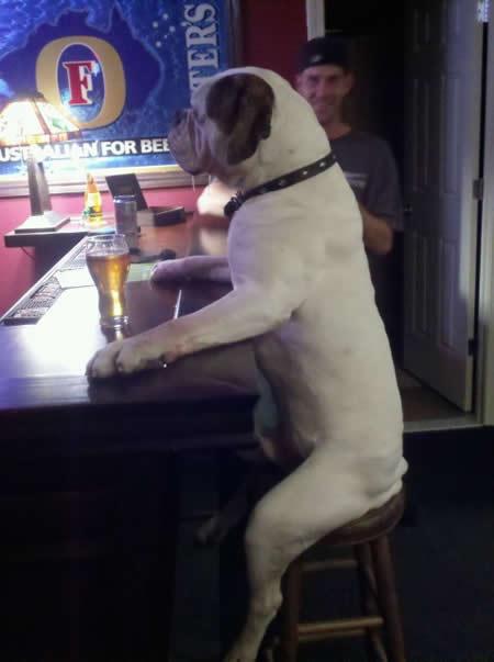 Фото: собака и пиво