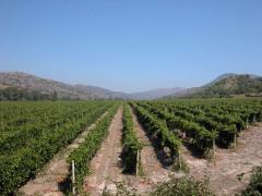 Фото: «Chateau Wine Village» или «Винное село» в Крыму