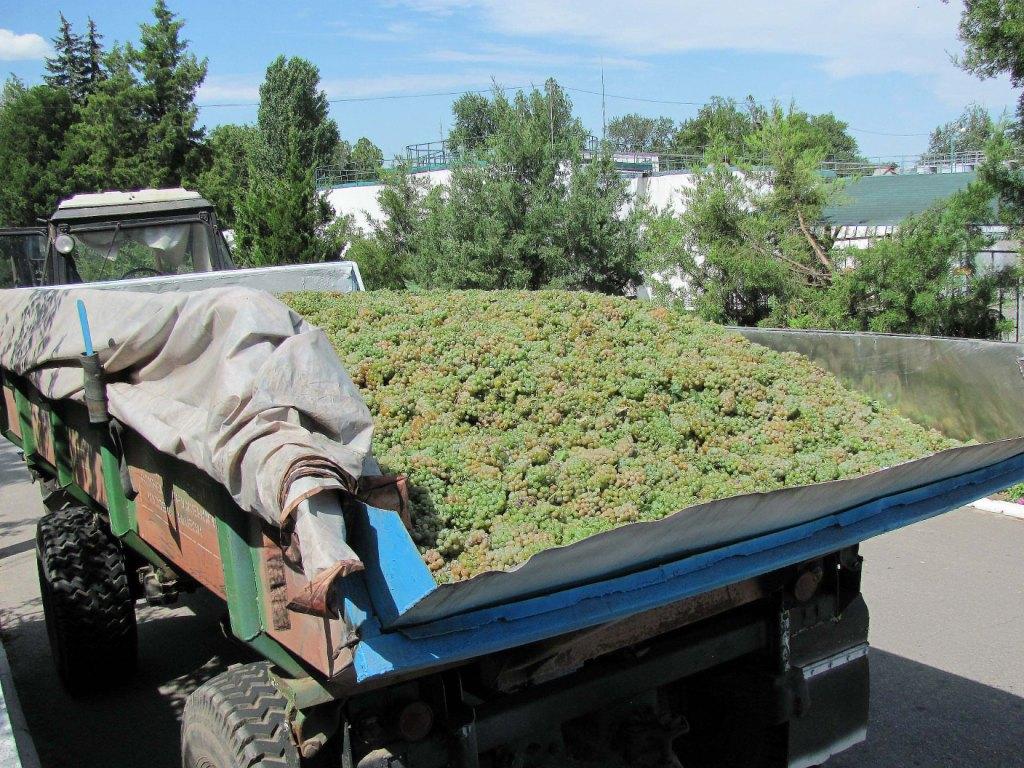 Фото: Дом «Таврия» встретил первую «лодочку» винограда.