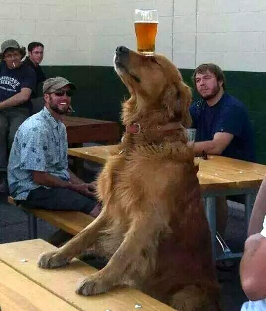Фото: На что только не пойдешь ради пива!