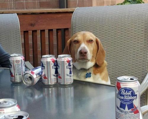 Фото: Собака — за пивом следяка.